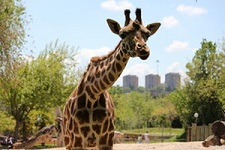 Entradas para Zoo Aquarium de Madrid: Sin colas