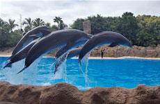 Oferta Loro Parque Siam Park